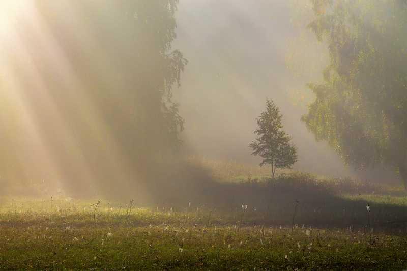 утро, рассвет, восход, туман, лучи Прелюдия осениphoto preview