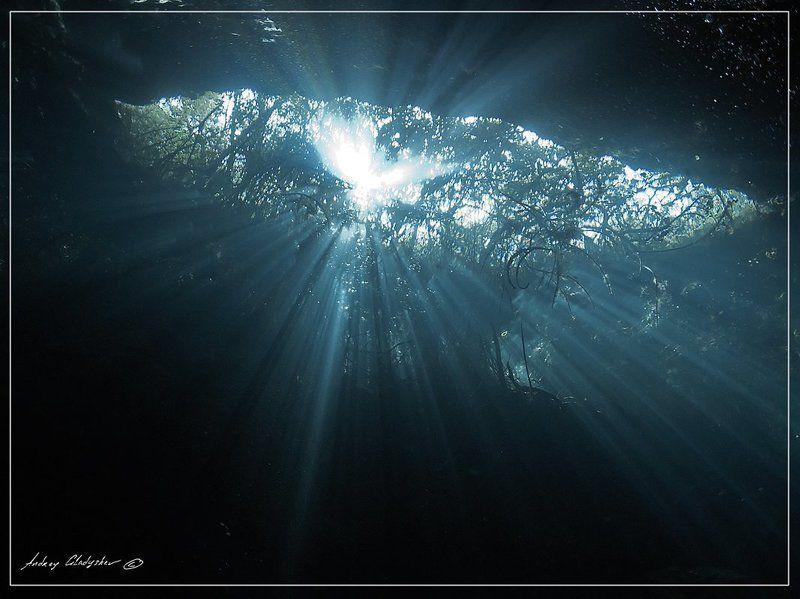 сенота, мексиа, подводная пещера Юкатан, Сенотыphoto preview