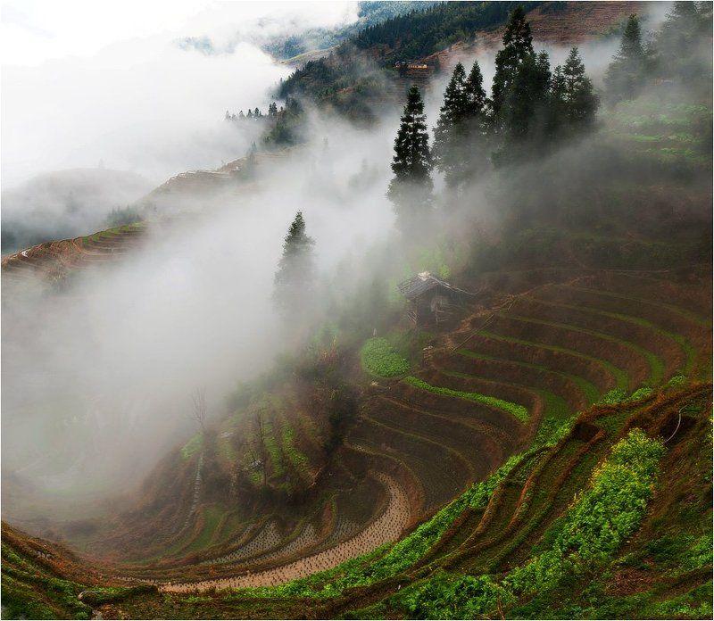 рисовые террасы лунцзи ,на территории деревни пинсян,китай хижина дядюшки Лиphoto preview