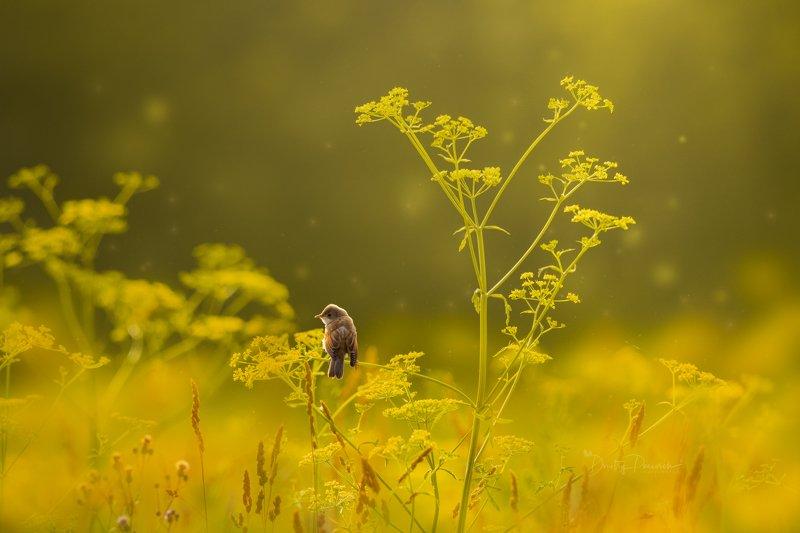 природа, лес, поля, огороды, животные, птицы, макро ... да призадумалась ;) фото превью