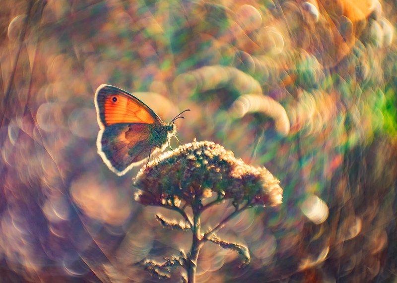 макро, бабочка Осень, бабочка и ещё непонятно что...photo preview