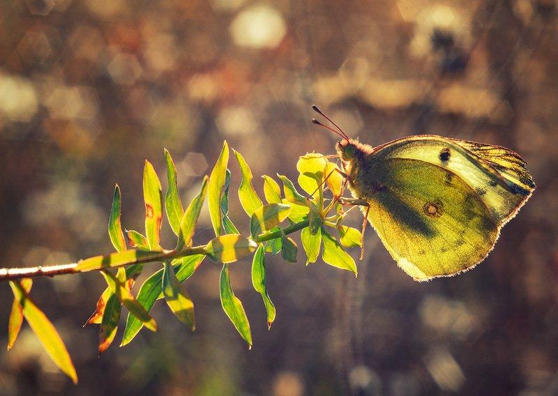 макро, бабочка Тёплая осеньphoto preview