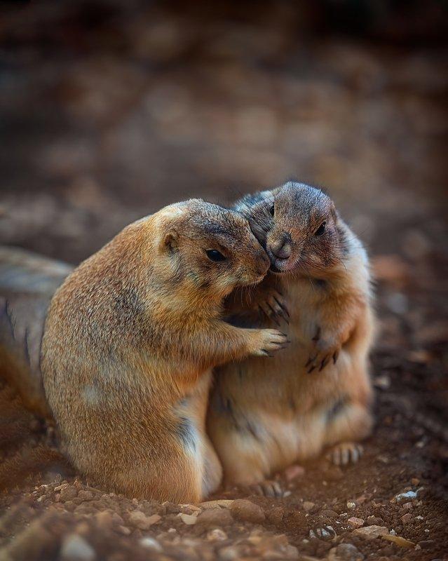 животные любовь Это любовьphoto preview