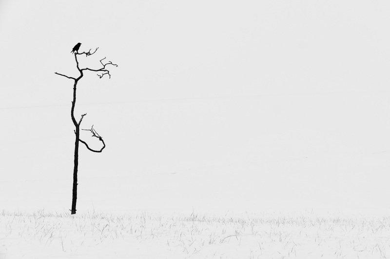 black and white, abstraction, nature, bird, tree, snow, minimalism, travel, landscape, silhouette, baikal, Одинокий воронphoto preview