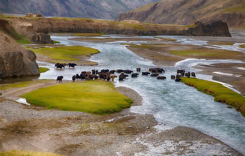 кыргызстан, горы История одной встречиphoto preview