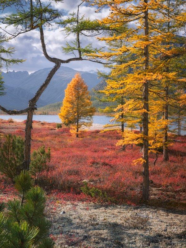 колыма, осень, озеро Цвета осенней Колымыphoto preview