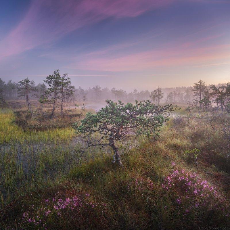 Живописное болотоphoto preview
