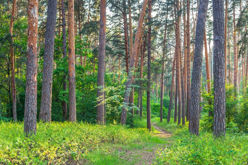 природа, лето, лес, деревья, воронежский заповедник photo preview