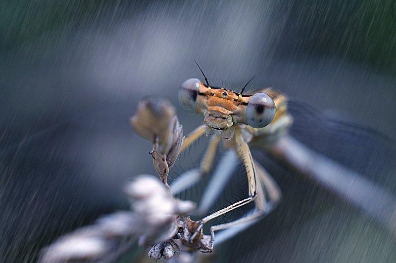 стрекоза, макро, лес, тишина, покой, гармония, гармония мира, природа, насекомые, стрекозы, макрофтография, вчувствование \