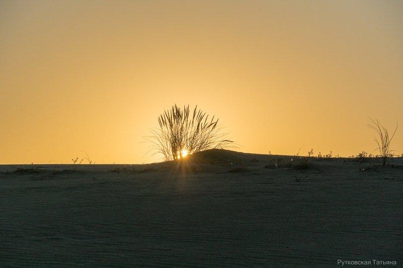 Утро на Куршской косеphoto preview