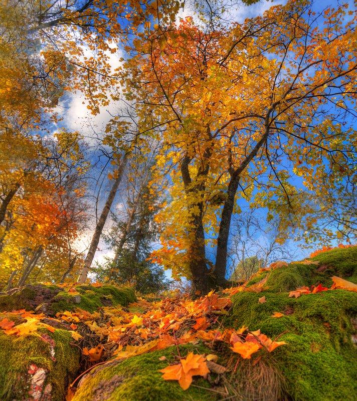 золотая осень в парке Монрепо...photo preview