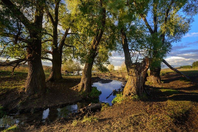 осень, речка, вечер Речка...photo preview