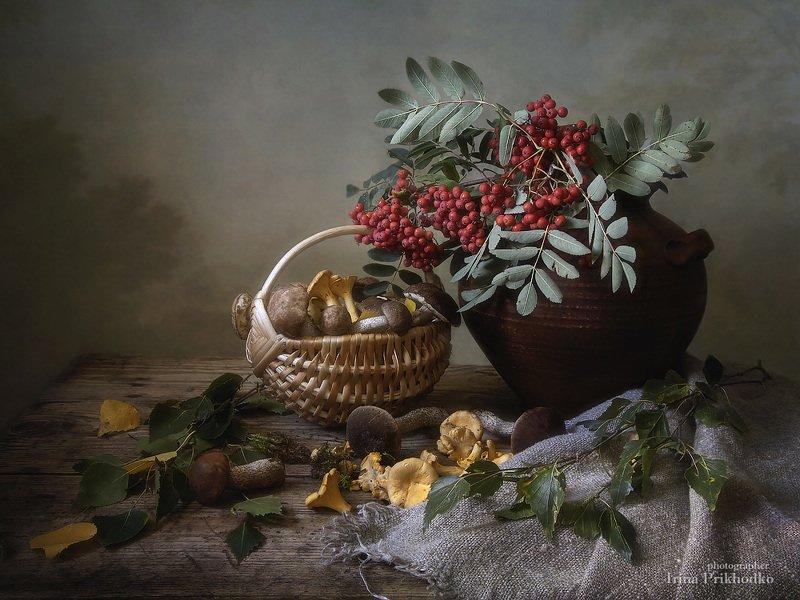 натюрморт, настроение, осень, грибы, рябина, лисички, подберезовики, деревенский Осень бродит ныне...photo preview