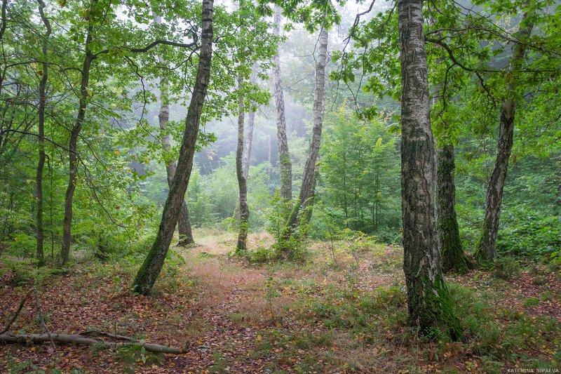 природа, осень, пейзаж, лес Первые осенние туманыphoto preview