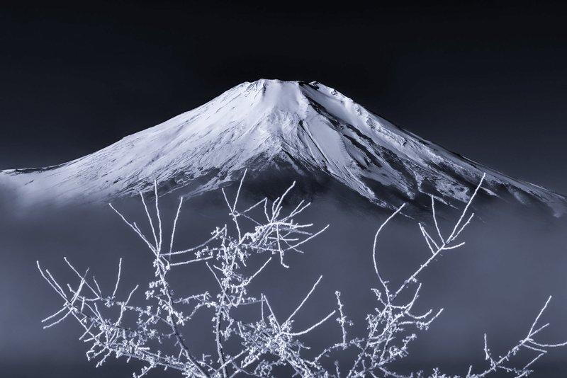 Fuji,Japan,mountain,snow,tree,fog,gas,haze,winter White tree branchphoto preview