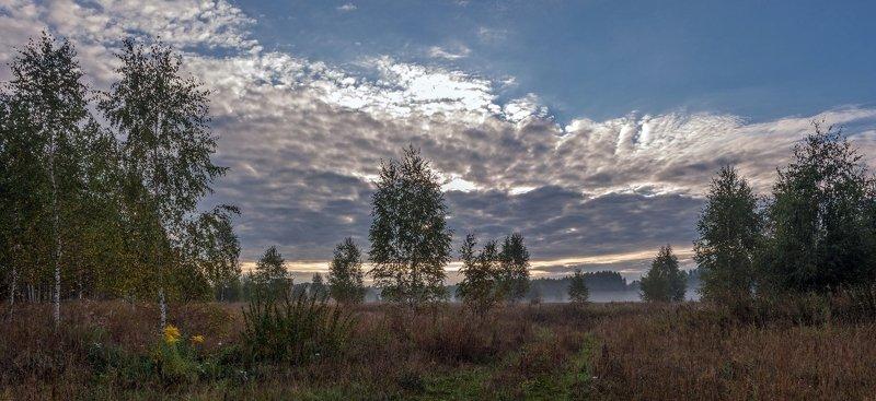 Осеннее утро с молодыми берёзкамиphoto preview