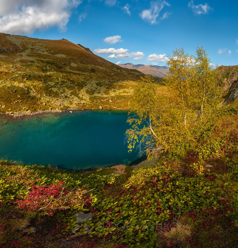 горы, кавказ, кавказские горы, архыз, осень, дуккинские озёра, озеро, рябина, горное озеро, дуккинское, озеро рыбка, сказка кавказа, берёза, дерево, облака, Дуккинские озёраphoto preview