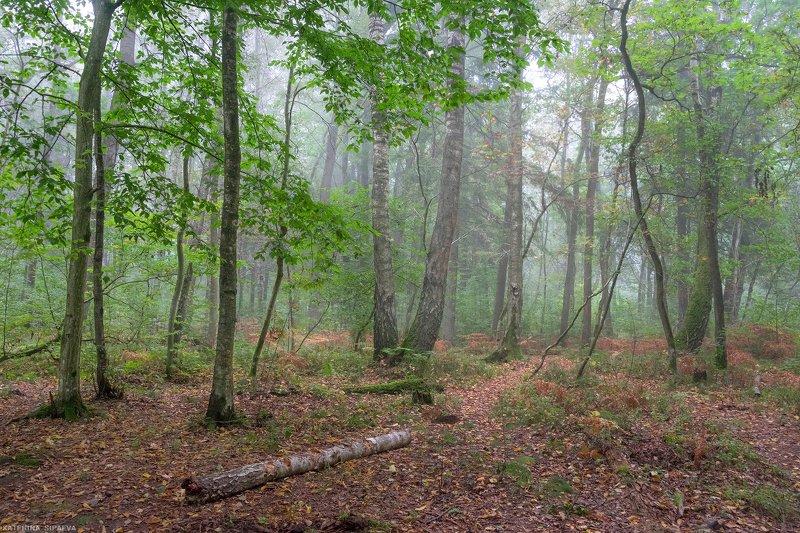 природа, осень, пейзаж, лес ***photo preview