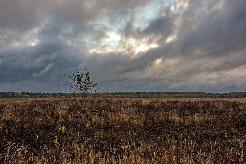 Во поле берёзонька стоялаphoto preview