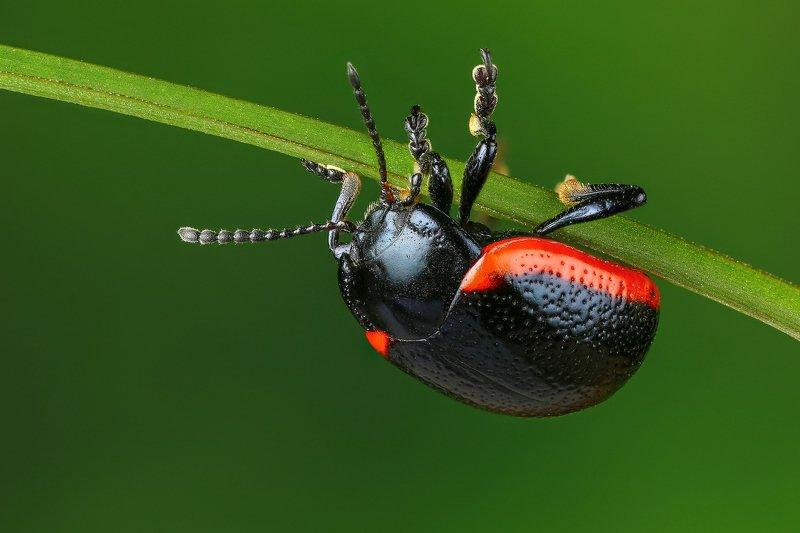макро,природа,насекомое,животное,жук,цвет,растение,зеленый Опасное положениеphoto preview