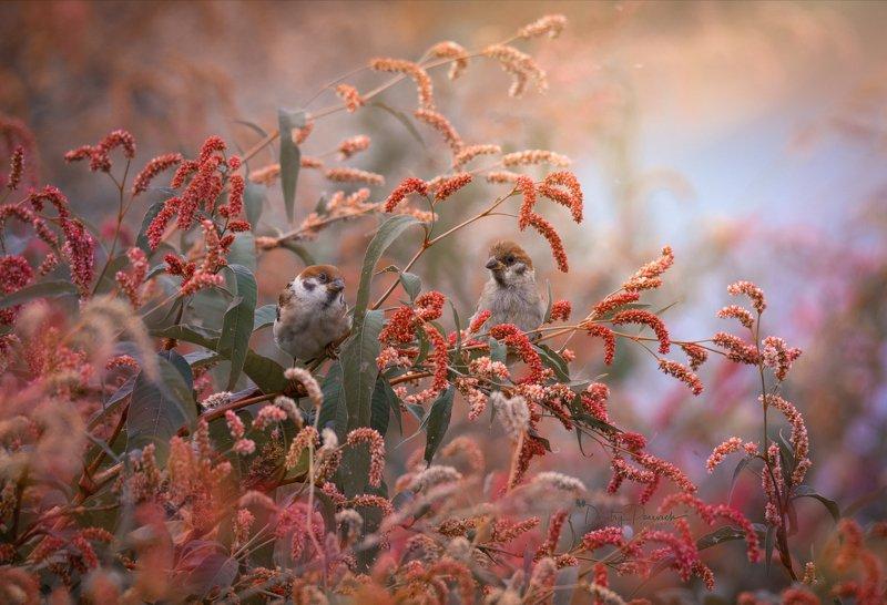 природа, лес, поля, огороды, животные, птицы, макро Осень расцвела фото превью