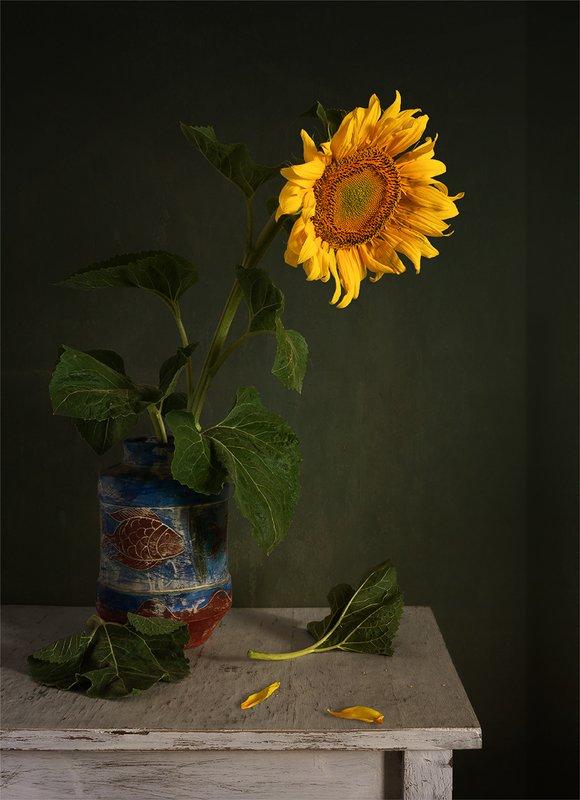 still life, натюрморт,    винтаж,    цветы,  подсолнух, натюрморт с подсолнухомphoto preview