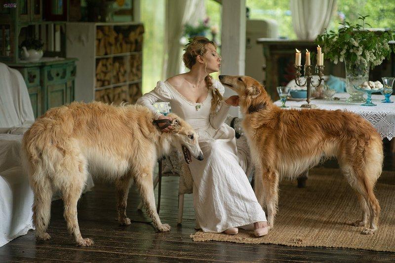 девушка, борзые, собаки, терраса, лето, ретро, аристократия Маргарита фото превью