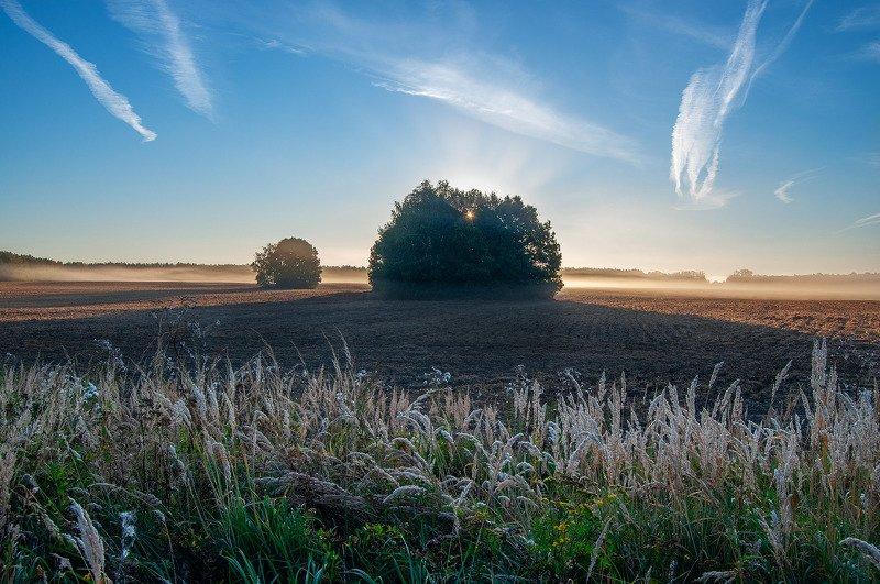 рассвет, туман, поле, утро ***photo preview
