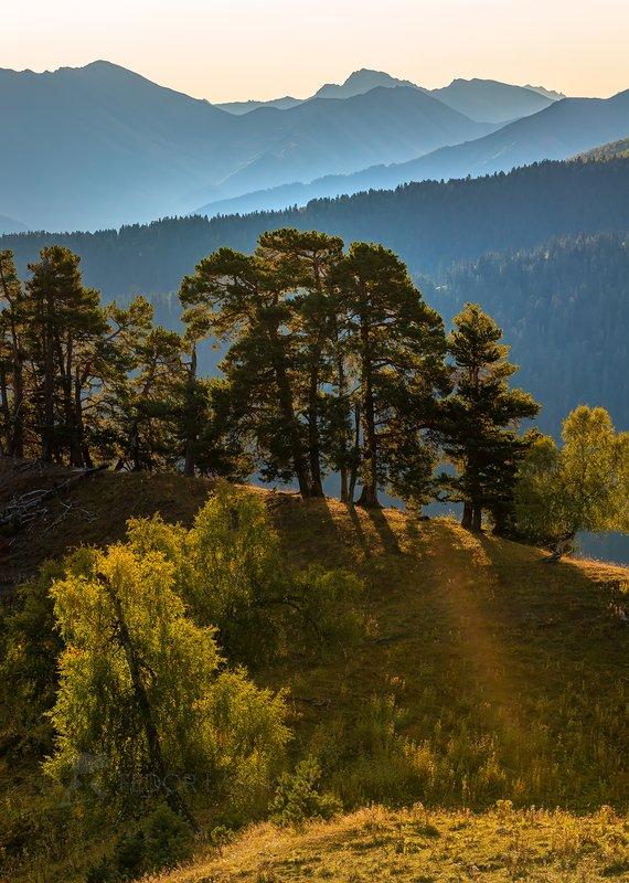горы, гора, кавказ, кавказские горы, туман, дымка, туманный, хребет, хребты, склон, вершина, лес, лесное, деревья, сосны, на фоне, осень, осенний, рассвет, Лес на фоне горphoto preview