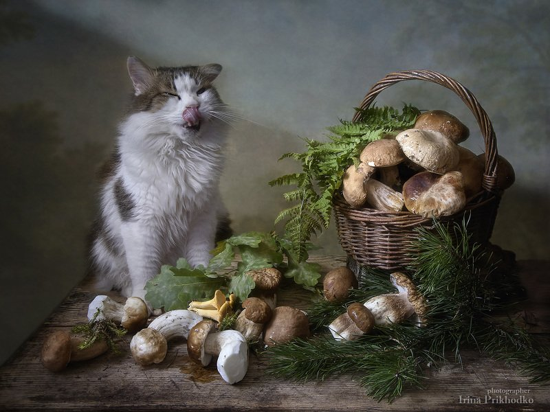 натюрморт, котонатюрморт, кот Лёва, белые грибы, домашние питомцы Вкуснятина!photo preview