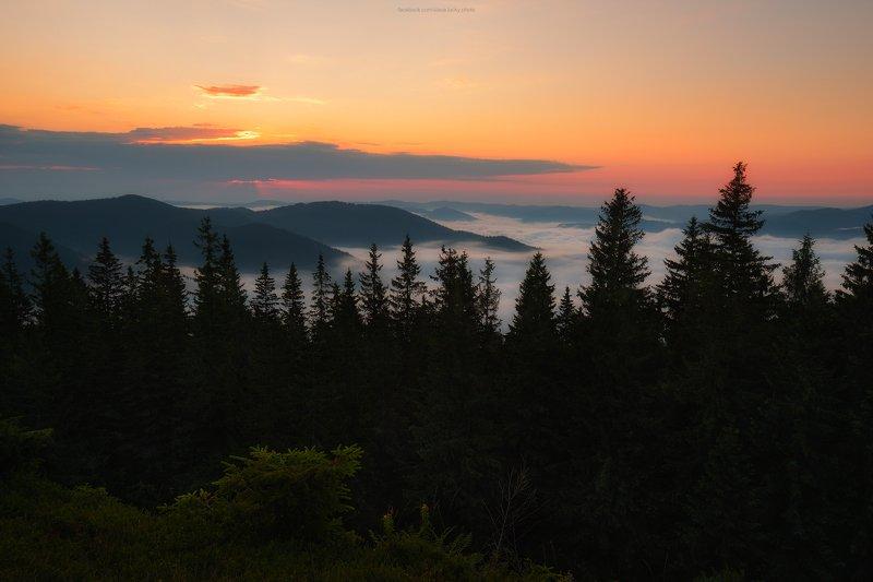 туман, рассвет, горы, карпаты, лес, деревья, природа На рассветеphoto preview