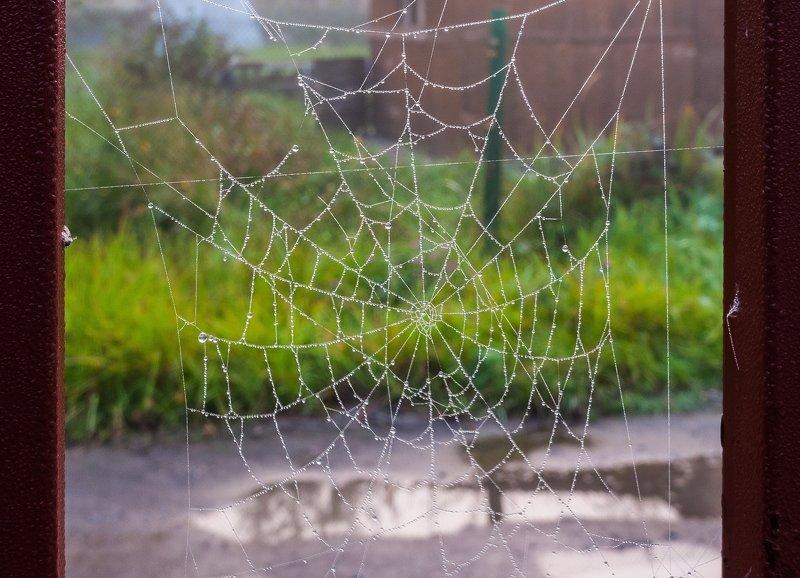 Осень... Утренних слёз паутина...photo preview